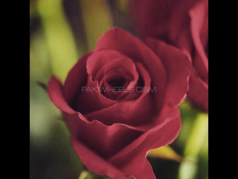 Datsun Cherry 2014 Image-1